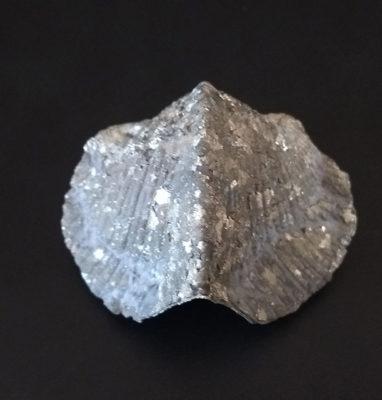 fosiles-braquiopodos-piritizados-2