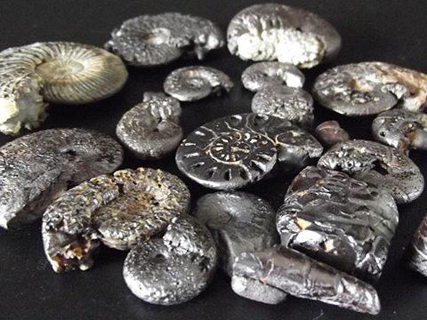 Colección de fósiles hematites