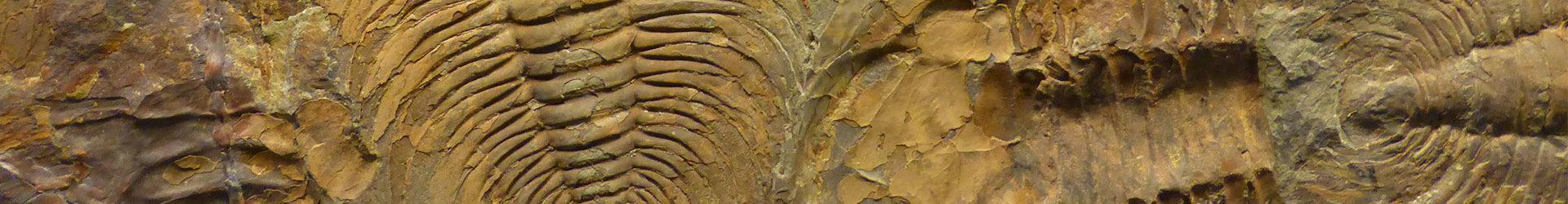 Best Fossils